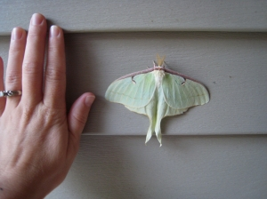 moth and hand