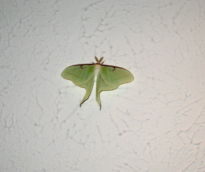 moth on the ceiling smaller