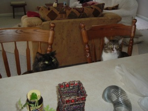counter cats